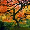 The Old Tree In The Fall